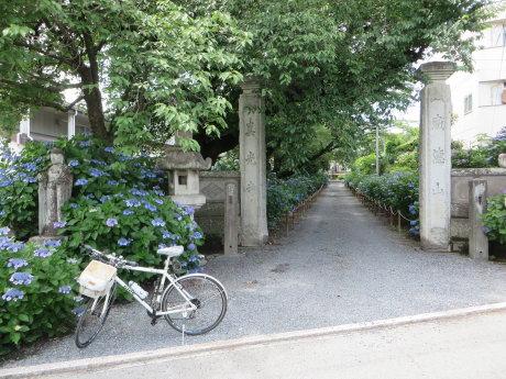 渋川のあじさい寺へ