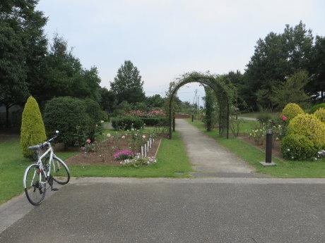 玉村町北部公園のバラが