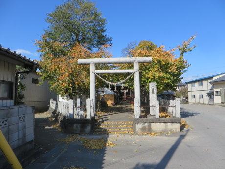 鏡神社で菊花大会