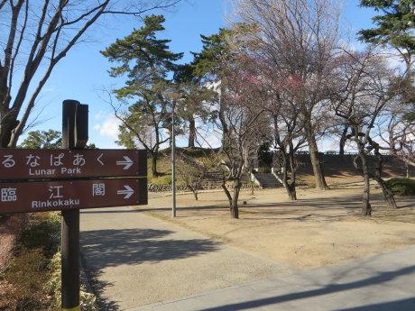 前橋公園の紅梅