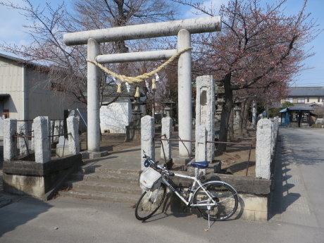 鏡神社の河津桜もそろそろ