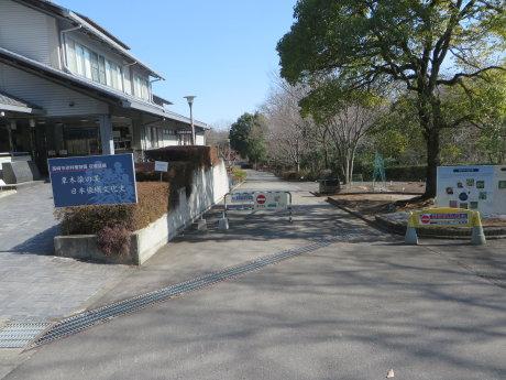 染料植物園の福寿草が見ごろになって