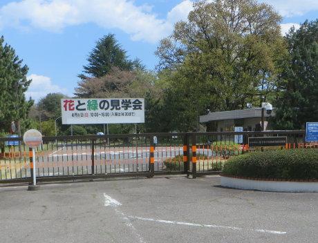 高崎量子応用研究所の「花と緑の見学会」へ