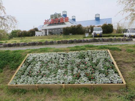 今日から始まる「花と緑のぐんまづくり2018in吉岡」