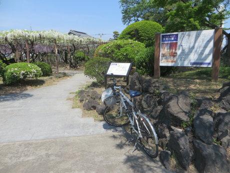 藤の花の名所、須賀の園は
