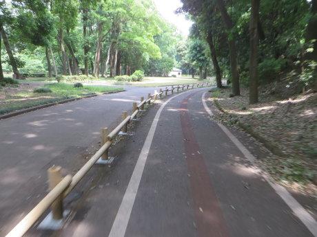 井野川沿いのサイクリングロードを走って