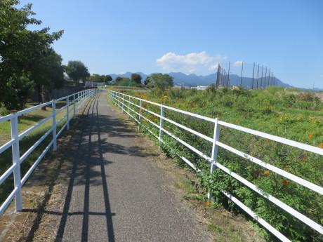 サイクリングロード沿いに彼岸花