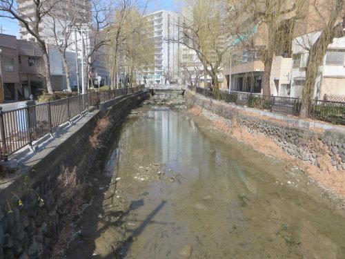 この時期の広瀬川は水量が少なく