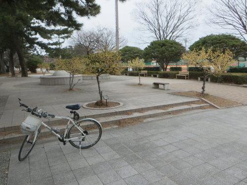 敷島公園のロウバイが