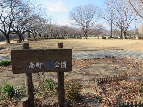 南町公園の河津桜の花が