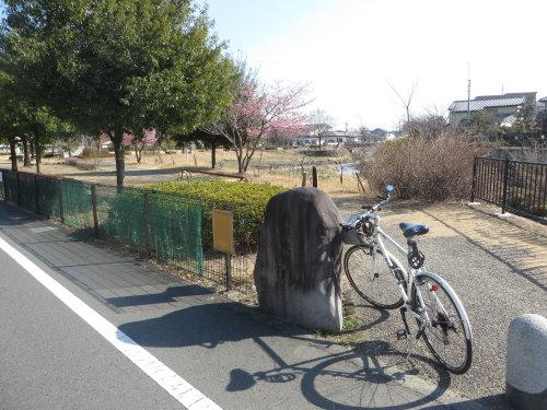 明神東公園の河津桜は
