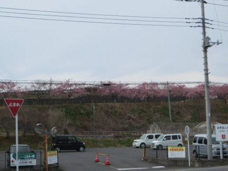 かわづ桜の丘白井へ