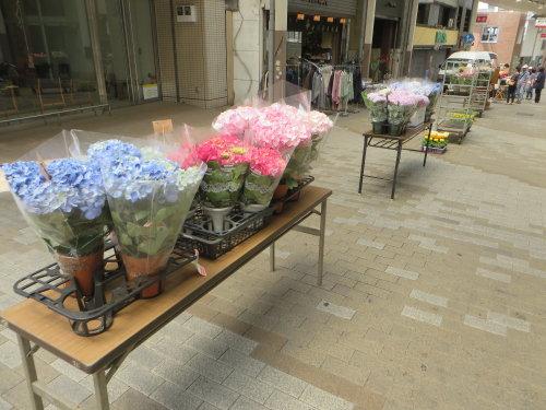 前橋中央通りで花花セール