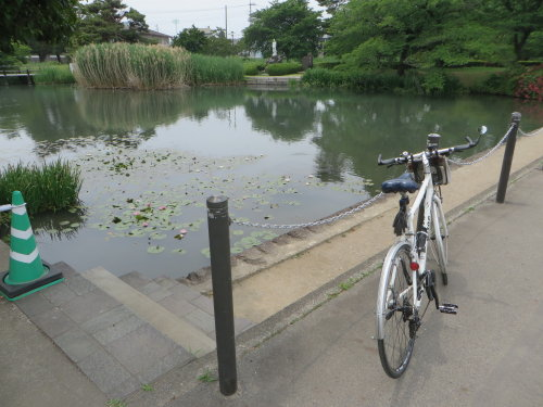 敷島公園のスイレン