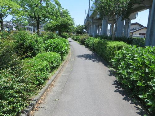 今年も赤堀花しょうぶ園までサイクリング