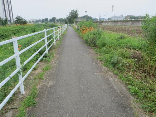 浜川運動公園の人道橋付近をうろうろ