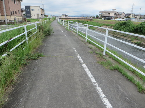 井野川サイクリングロードを通って