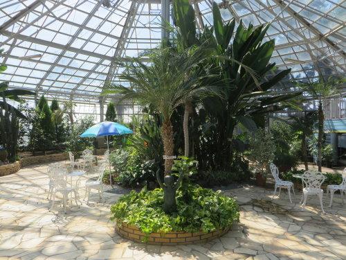 前橋ばら園の温室にはパパイヤやストレリチア・レギネ
