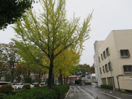 色づく街路樹と下村善太郎像