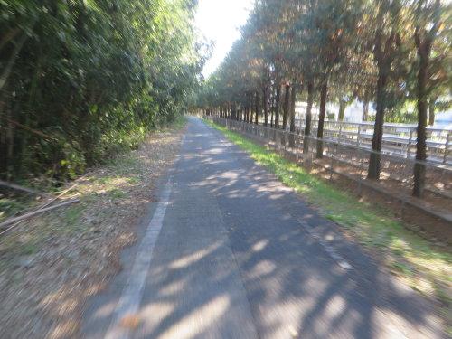 サイクリングロードの危険な凸凹
