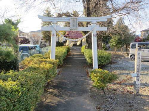 井野神社の大銀杏も色づいて