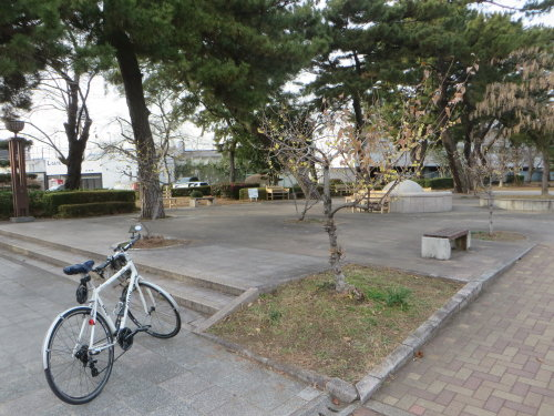 敷島公園のロウバイ