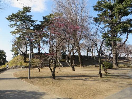 前橋公園に紅梅の花が