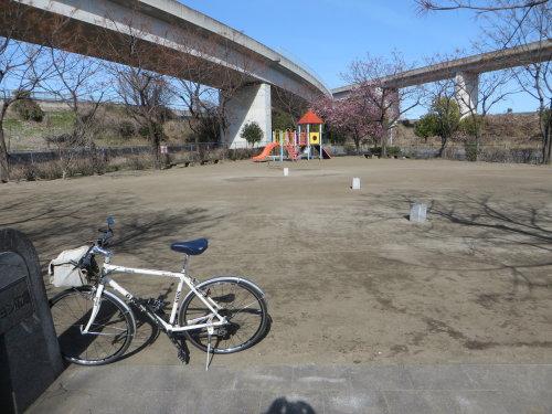上滝ジャンクション広場の河津桜