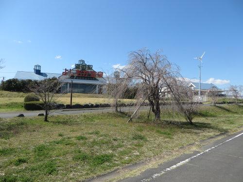 吉岡町のしだれ桜
