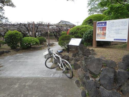 須賀の園の藤の花は、まだ早かった