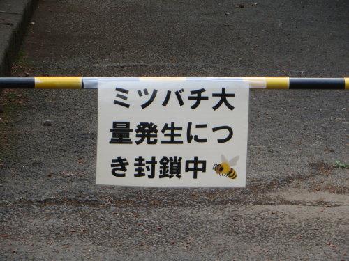 敷島公園でミツバチ大量発生?