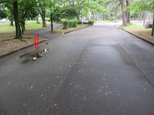 敷島公園に2羽のカモ
