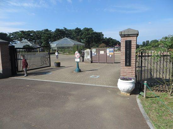 敷島公園門倉テクノばら園では、ばらの花が