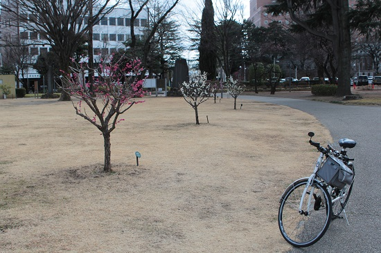 前橋公園の梅